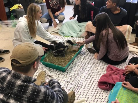 Non-profit animal farm visits PV