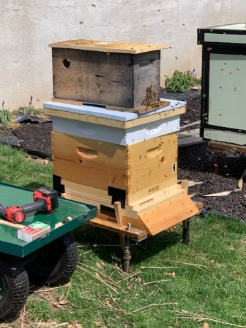 The bees for the beekeeping program arrived on April 4, but could not be stored since Pascack Valley is shut down due to the coronavirus. Science teacher Kristen Lindstrom came up with the idea to temporarily have them in her parents' backyard who are beekeepers until September.